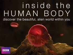 Picture of a TV show: Inside The Human Body