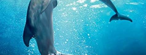 Image of Dolphin Tale 2