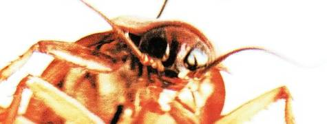 Image of Papa Roach