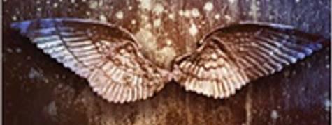 Image of Angelfall