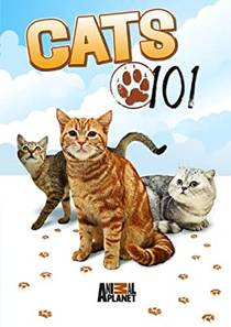 Picture of a TV show: Cats 101