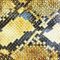 Picture of a band or musician: The Amazing Snakeheads