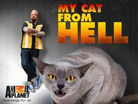 Picture of a TV show: My Cat From Hell