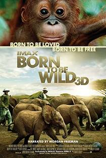 Picture of a movie: Born To Be Wild