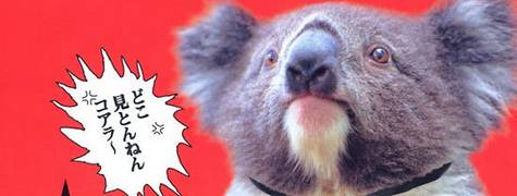 Image of Executive Koala